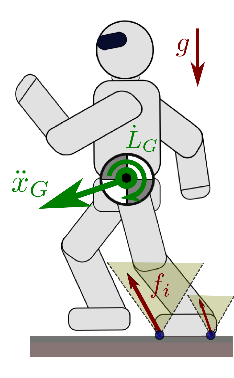 Humanoid whole-body dynamics involve contact forces and the dynamic momentum