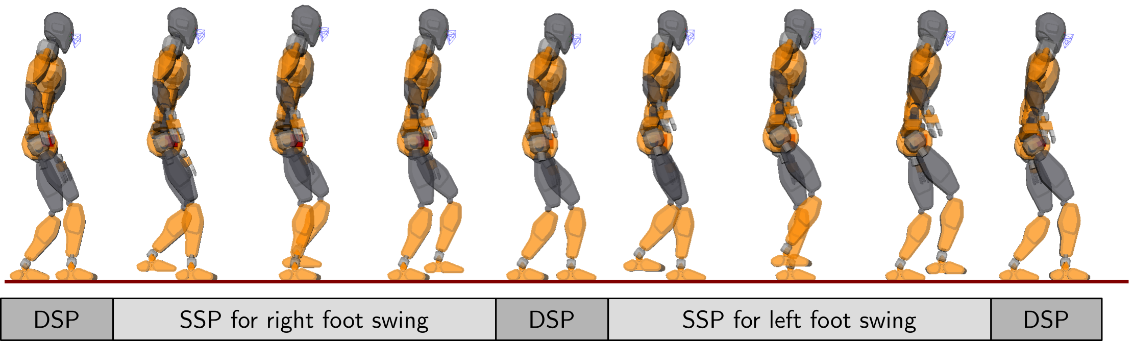 Single and double support phases while walking